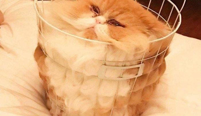 20 смешных фотографий кошек доказывающие, что они жидкие