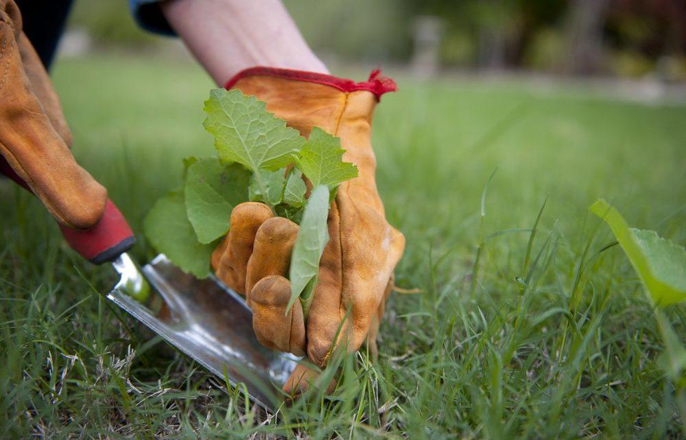 Работающий способ, как избавиться от сорняков и травы