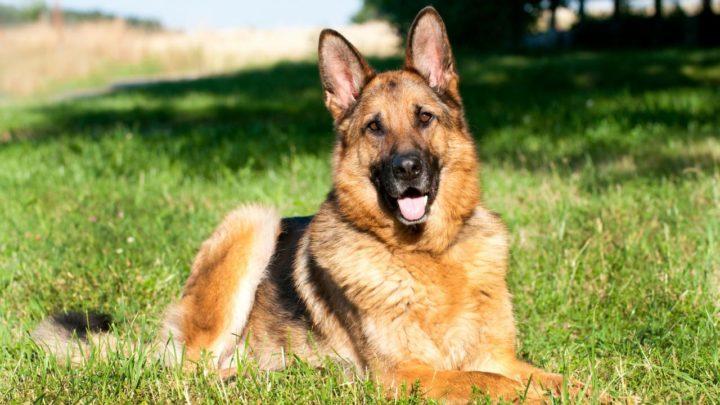 17 великолепных высказываний о собаках, которые вас одновременно и рассмешат, и растрогают