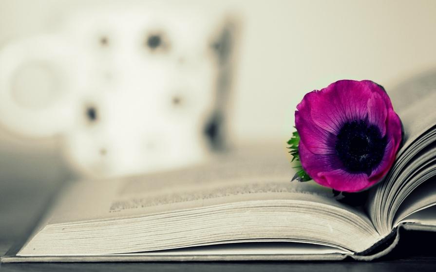 25 красивых и мудрых цитат