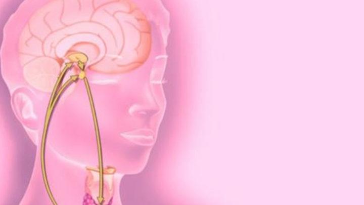 Как определить, какого гормона не хватает в организме