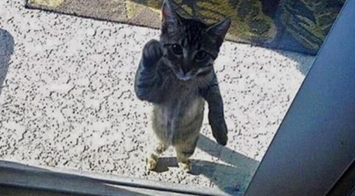 24 забавных фото животных, которых забыли пустить домой