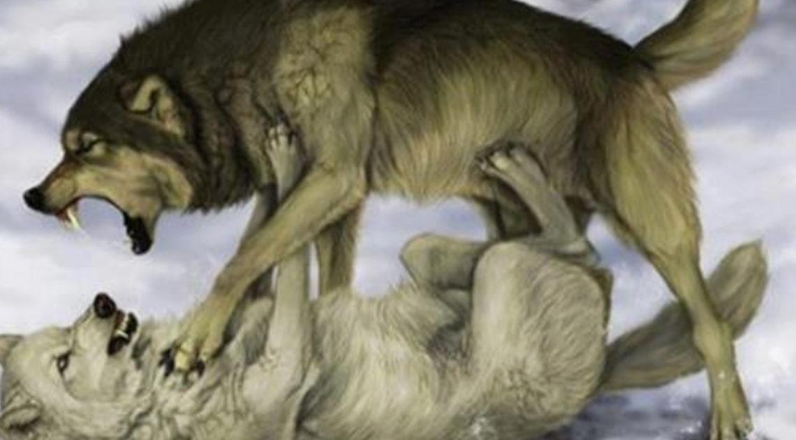 Мудрая притча про двух волков.