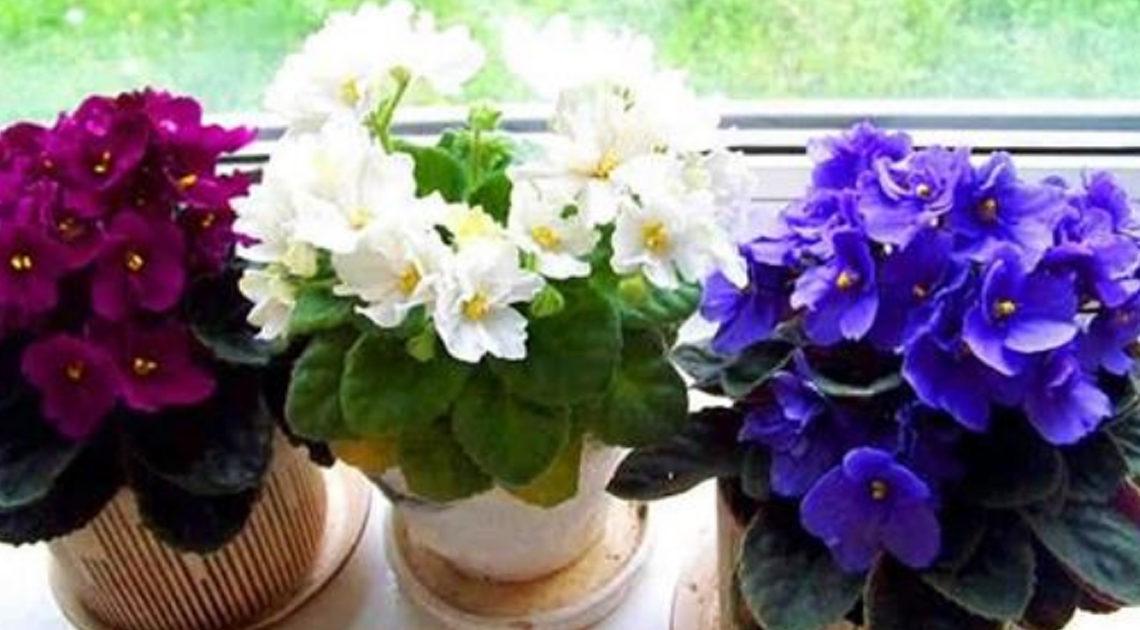 Три простых трюка для здоровья и красоты комнатных растений.