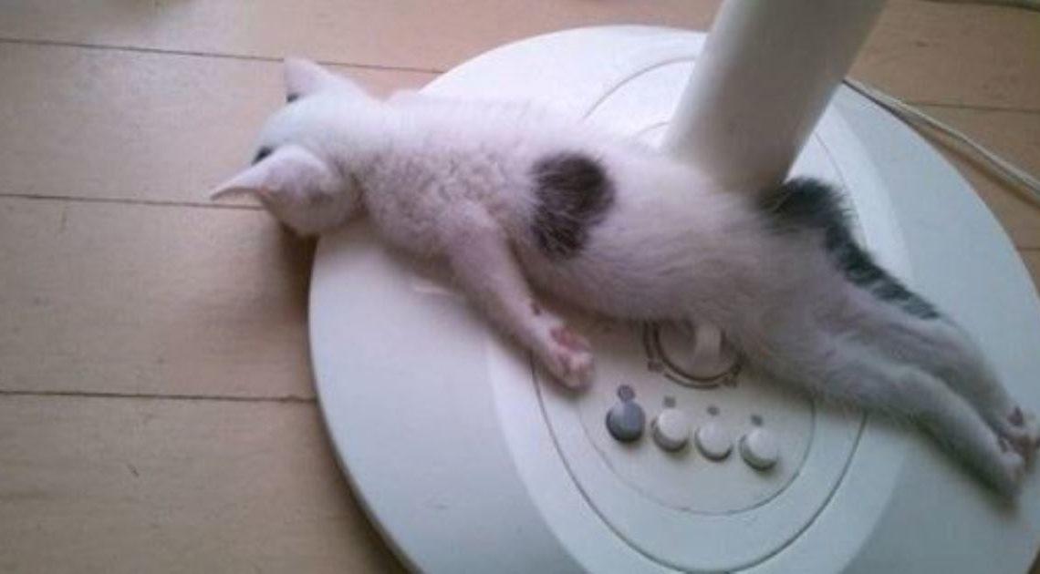 19 фотографий самых смешных спящих животных