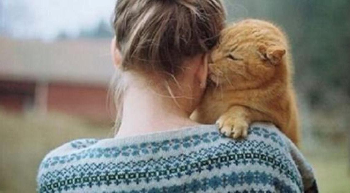 Кошатникам на заметку. 30 интересных фактов о кошках + несколько полезных советов.