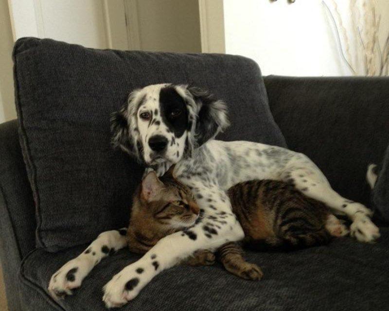13 фото собак и кошек, которые сумели подружиться
