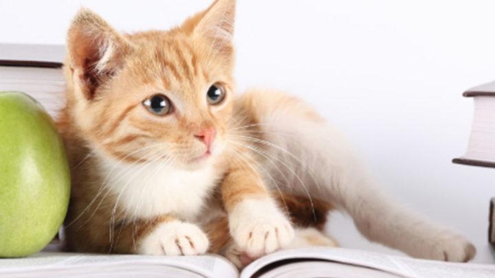 10 самых умных животных, которые способны на многое