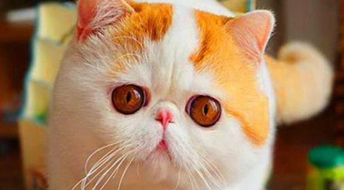 Красавицы-кошки во всей своей красе.