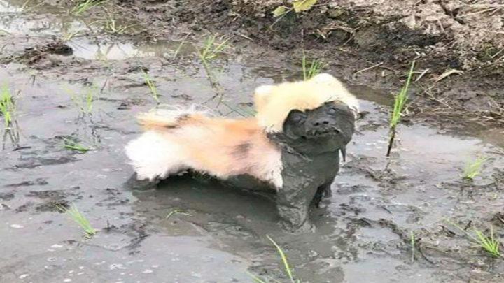 Хозяева этих собак сильно пожалели, что отстегнули поводок