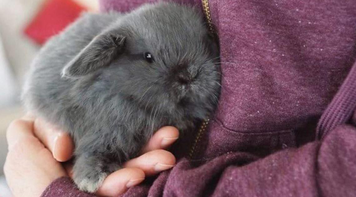 Полные милоты и очарования фотографии прелестных крольчат