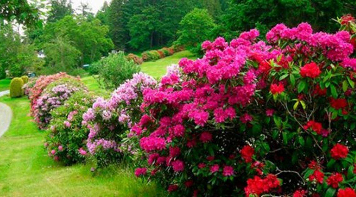 27 цветущих кустарников, которые преобразят ваш сад.