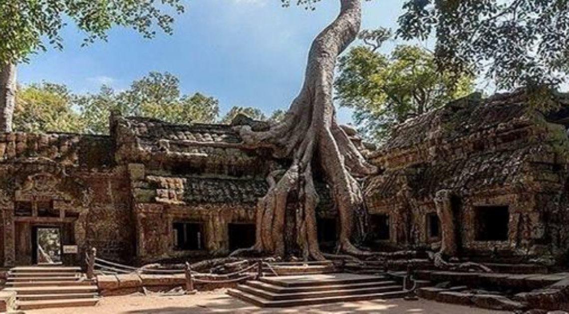 15 нереально крутых деревьев, которым плевать на обстоятельства.