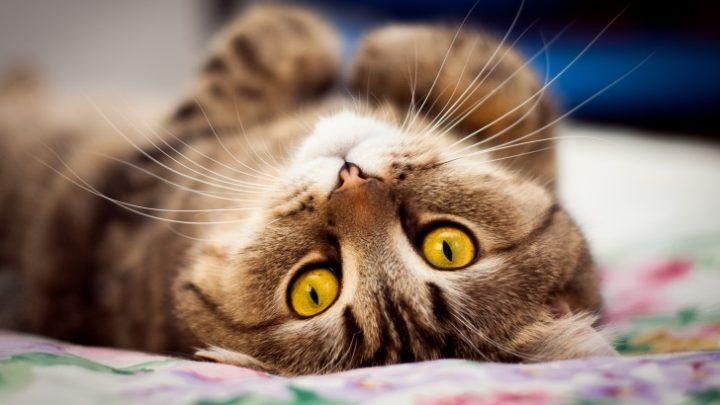9 веских причин любить кота